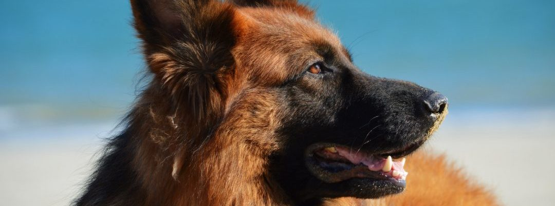 4 Ways a Service Dog Can Help With Mental Illness