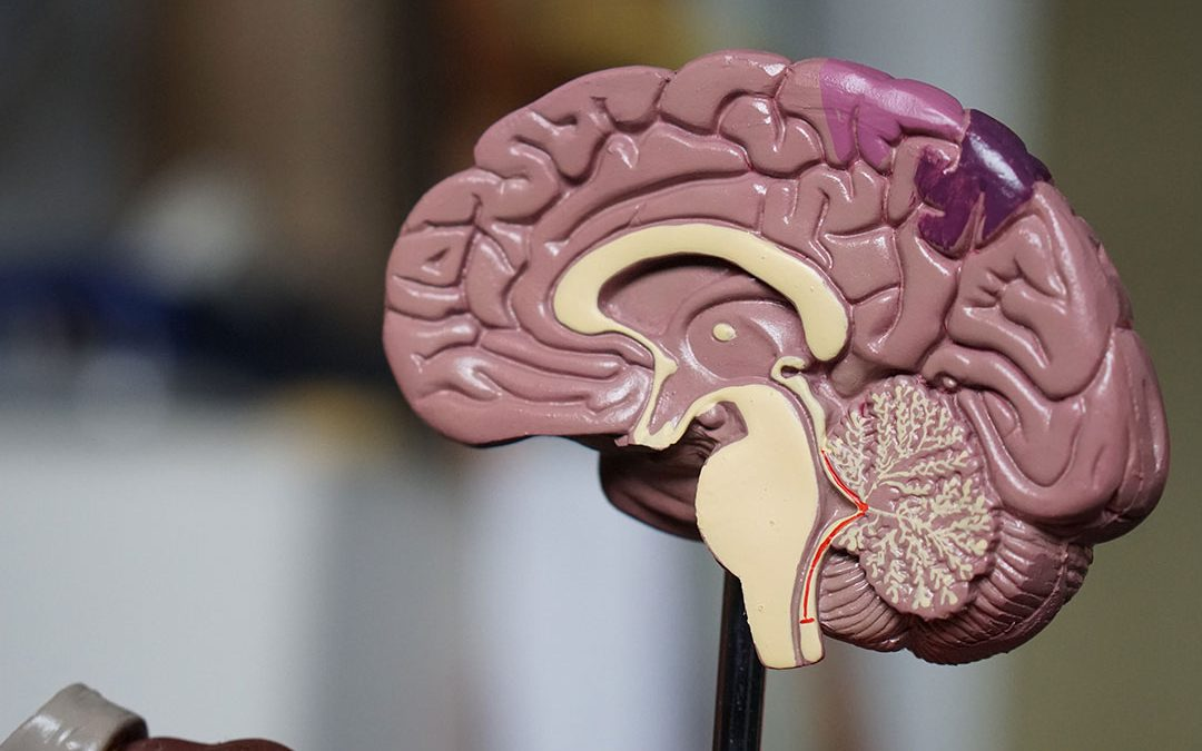 Brain Blood Vessel Abnormalities Possible Schizophrenia Cause, Scientists Discover
