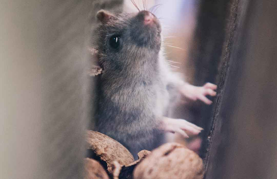 DNA modification reduced fear in mice, could treat anxiety in humans (Video)