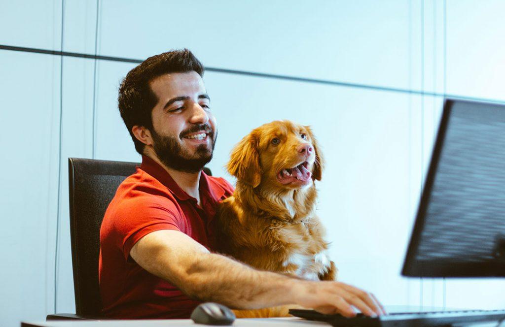 dog and man looking at screen
