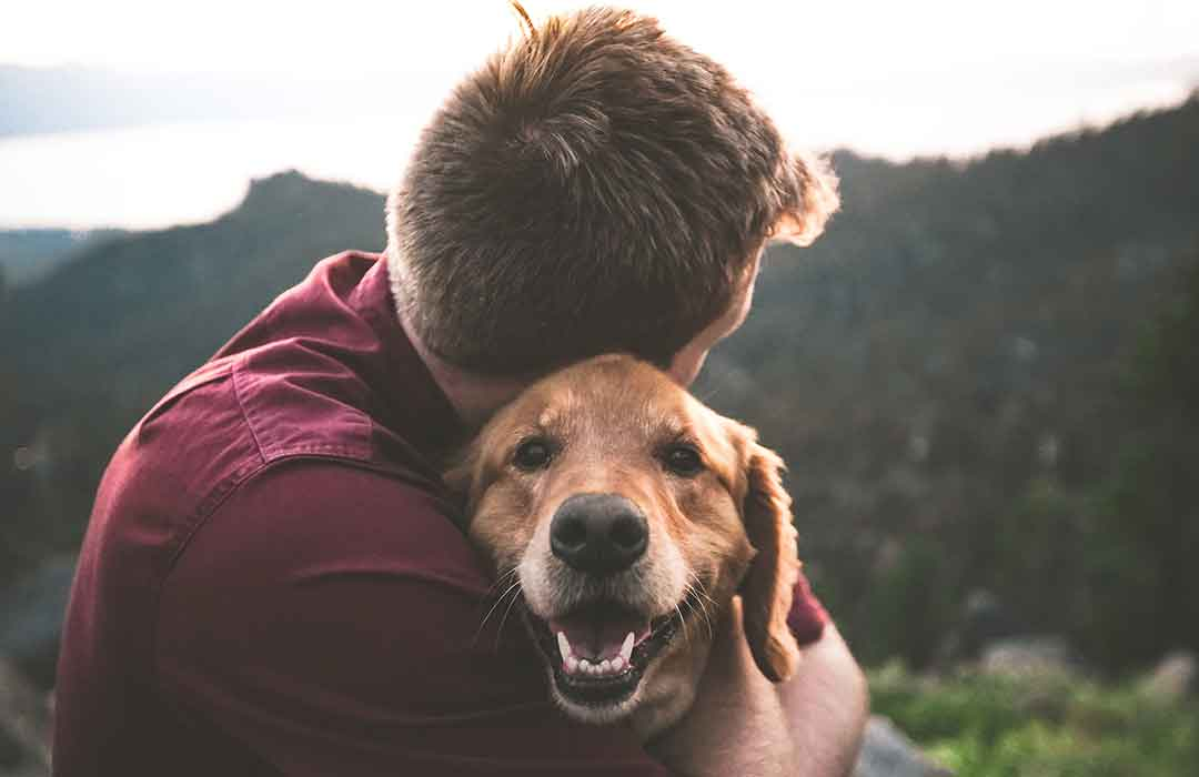 Petting cats and dogs reduces stress! (Video)